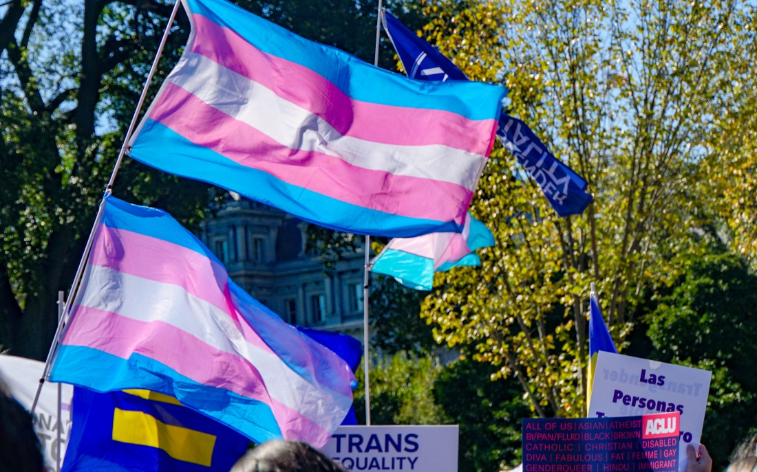 Transgender flags waving in the wind in a park